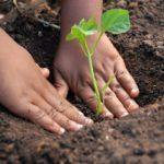 Piantiamo alberi e fermiamo il consumo di suolo