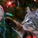"""Natale e animali: vademecum per feste """"cruelty free"""""""
