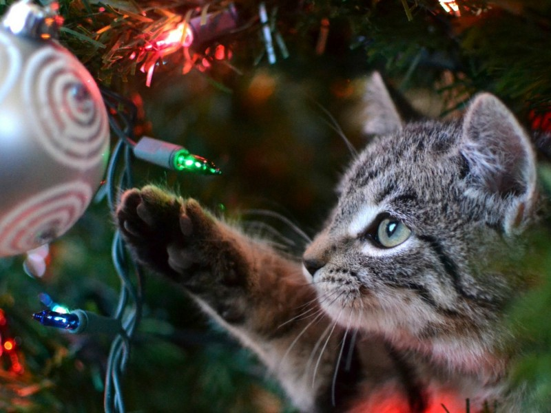 Immagini Natalizie Con Animali.Natale E Animali Vademecum Per Feste Cruelty Free