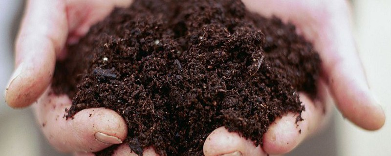 soil_in_hands_-_francesca_yorke
