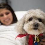 Lombardia: animali negli ospedali per visitare i pazienti