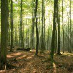 Treedom, piantare o donare un albero con un click