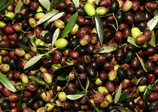 rome-history-olive-oil-recipes_608