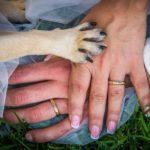 Cani in chiesa, sono ammessi per i matrimoni?