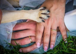 Foto di www.weddingdogsitter.com(riproduzione riservata)