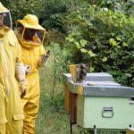 3BEE: un'arnia tecnologica per salvare le api