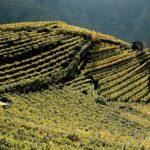 Banca della Terra: anche il Trentino avvia il ripristino dei terreni incolti e abbandonati