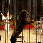 Animali al circo: ecco perché è giusto vietarli