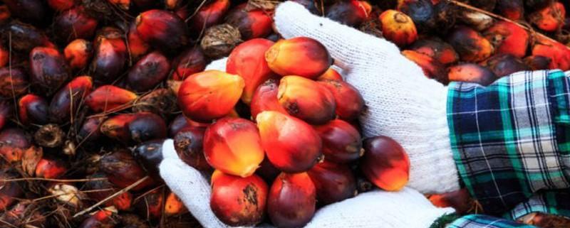 palm-oil-2-e1466166957537