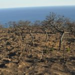 Pantelleria: diecimila alberi per la rinascita dell'isola