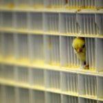 """""""Dead Zone"""": come gli allevamenti intensivi mettono a rischio la biodiversità"""