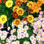 FloraCult: Italia che Cambia alla mostra dei fiori di Roma