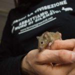 Sperimentazione animale: intervista agli attivisti sotto processo