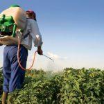 """Onu: """"I pesticidi sono inutili e uccidono 200.000 persone ogni anno"""""""