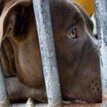 Animali nel codice civile: cosa cambierebbe?