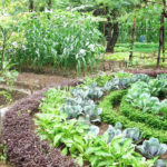 L'agricoltura biointensiva e la formula della sostenibilità
