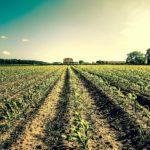 Politica agricola europea: i cittadini chiedono una riforma profonda