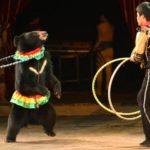 Il futuro del circo senza animali