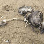 Ecocidio: un reato per fermare le multinazionali della chimica