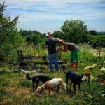 Terreni in dono ai giovani contadini: un successo clamoroso!