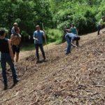 Università nel bosco: opportunità di studio e lavoro nella natura