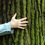 Ecopsicologia: natura e psiche si incontrano