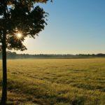 """""""Terre AbbanDonate"""", un progetto per recuperare i terreni non utilizzati"""