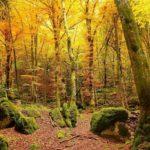 Connettersi con la natura per riscoprire se stessi