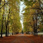 Parco Talon: a rischio uno dei polmoni verdi di Bologna