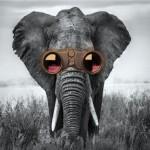 Elefante Festival: un modo diverso di guardare il tempo