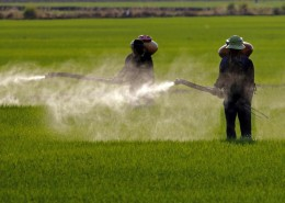 farmer-spraying-web