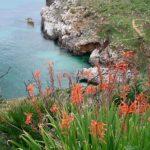 La Riserva dello Zingaro, un angolo di paradiso salvato dal cemento