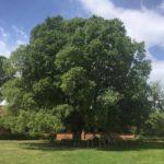 A tu per tu con gli alberi: la Società Italiana di Arboricoltura