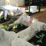 Compost dai rifiuti per combattere la povertà energetica