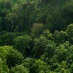 La Grande Foresta del Nord distrutta per i fazzoletti di carta