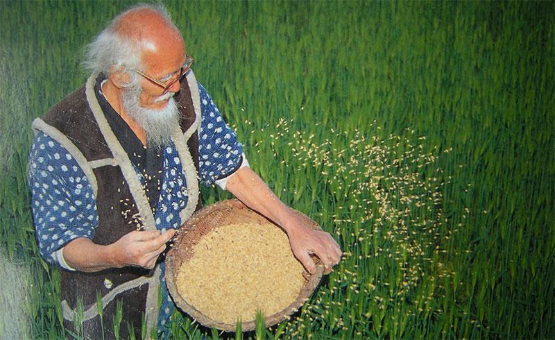 """Masanobu Fukuoka, padre dell'agricoltura naturale e autore del libro """"La rivoluzione del Filo di Paglia"""""""