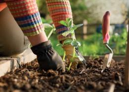 Hands-Gardening_i