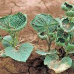 Dicamba, Monsanto e un'agricoltura drogata