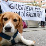 """""""Sopprimevano i cani piuttosto che curarli"""". Condannati i vertici di Green Hill"""
