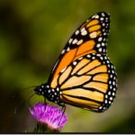 Investire nell'ambiente paga e riduce la perdita di biodiversità