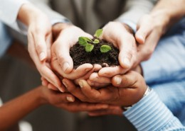 Business development - Closeup of hands holding seedling in a group
