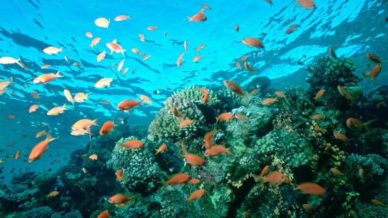 fish-underwater-ocean-coral-reefs