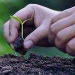 Terreni agricoli: al bando 8mila ettari coltivabili