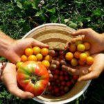 Cibo e clima: cambiare dieta può cambiare il mondo
