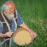 """L'agricoltura del """"non-fare"""": una via alla rivegetazione del deserto"""