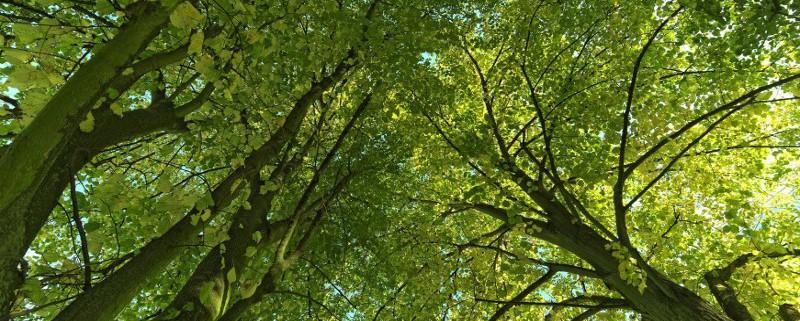 Trees_JeroenVanNieuwenhoveFlickr
