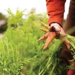 Agricoltura Sociale e inclusione lavorativa: un anno di traguardi in Lombardia