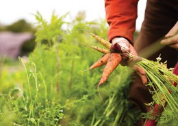 green-heart-family-farm-carrot-harvest_credit-Robin-Jolin1