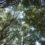 Sardegna, un bosco protetto per fermare la desertificazione