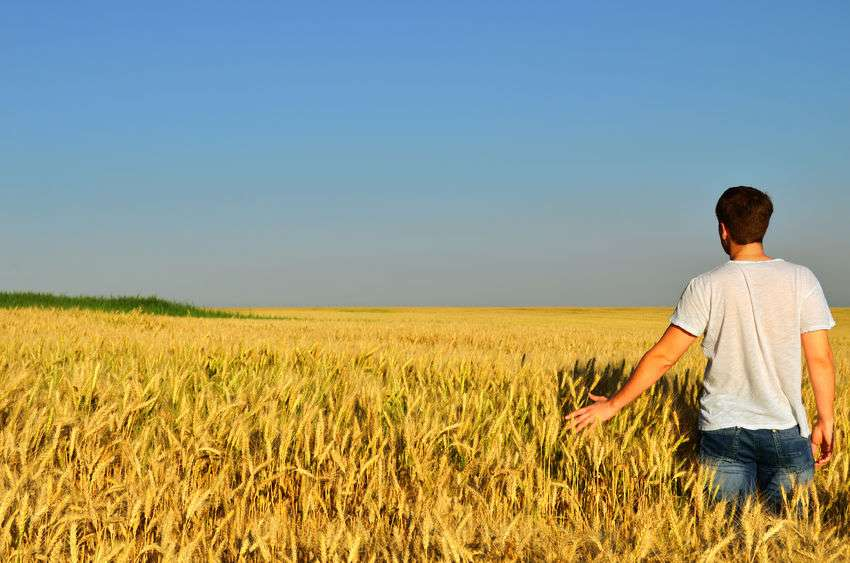 42178162 - young man looks into the distance in a barley field